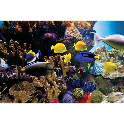 [THND] 올댓포스터 열대어와 산호초 (PP34125)